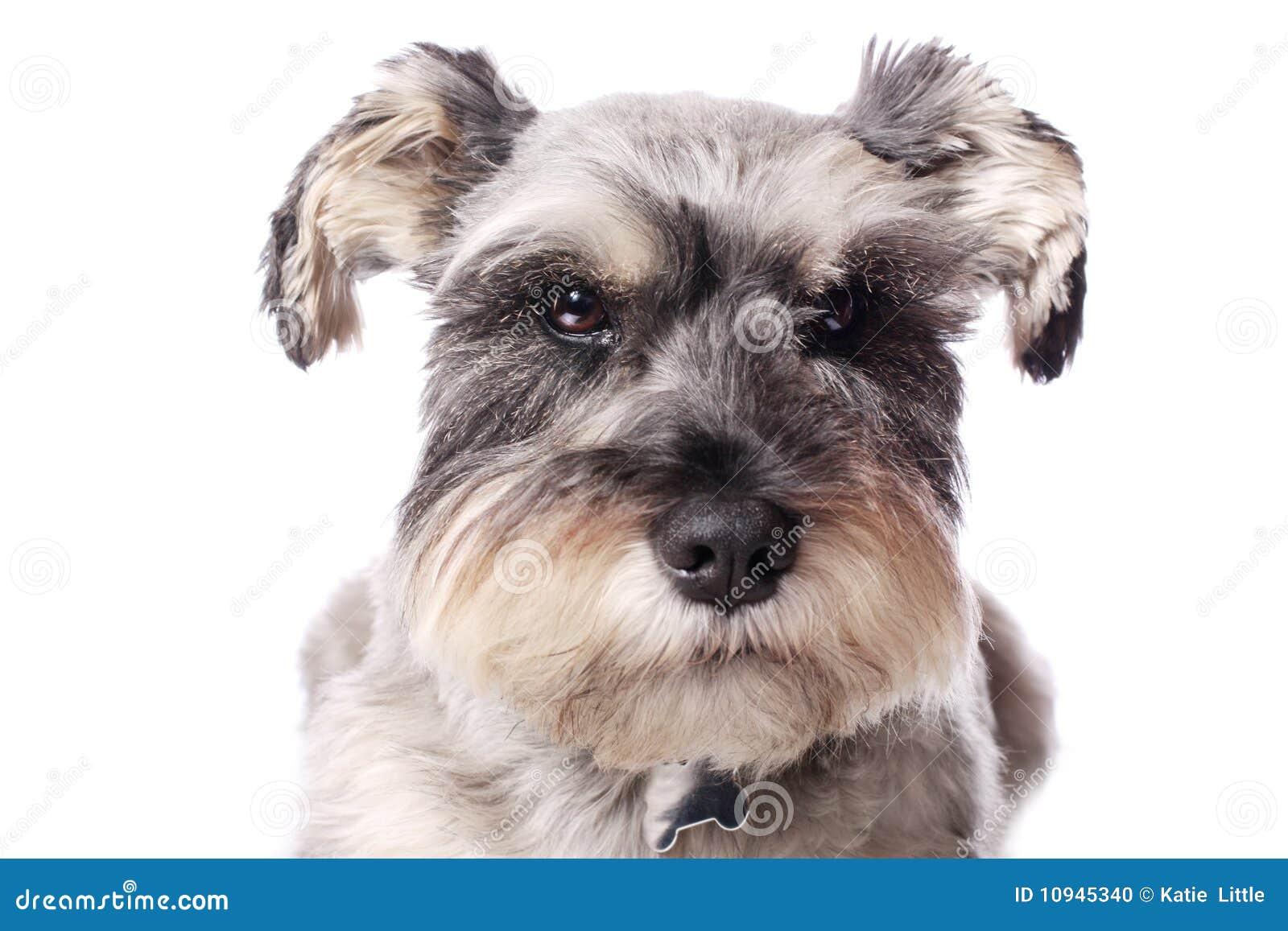 прелестная собака немногая