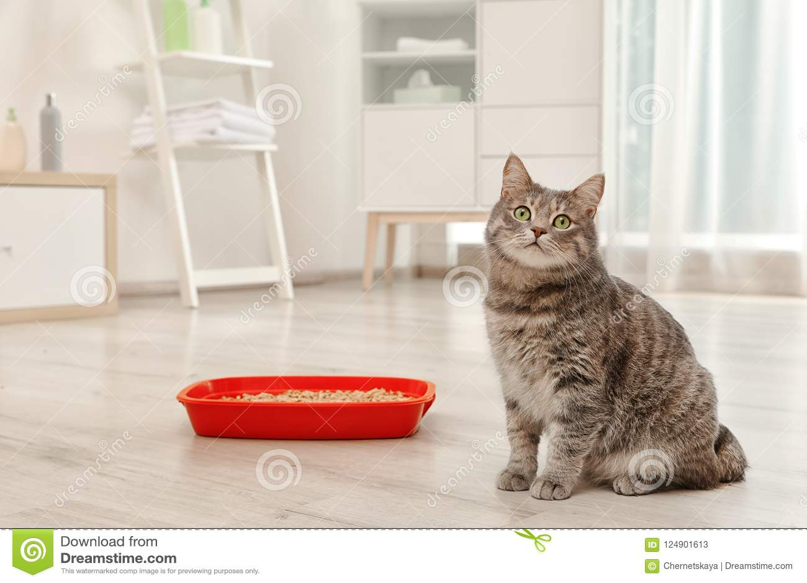 Прелестный серый кот около коробки сора внутри помещения
