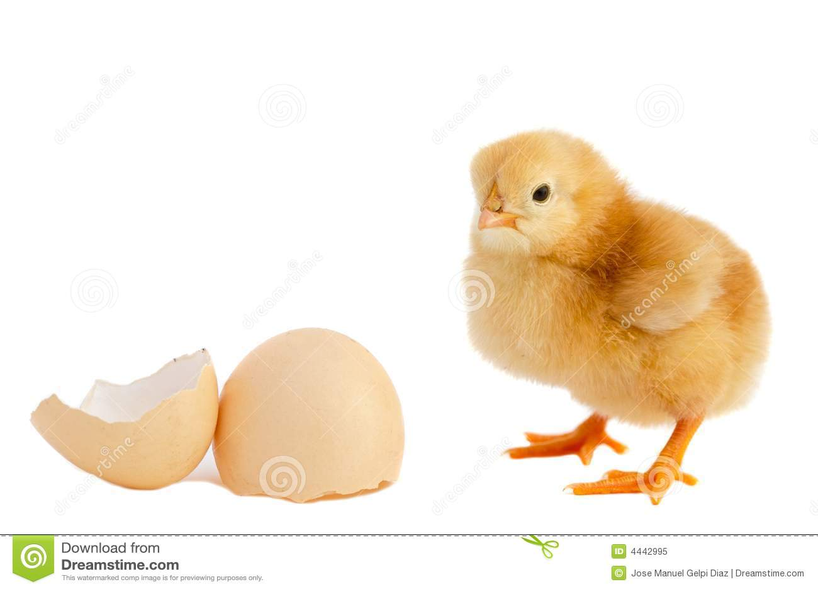 прелестный цыпленок младенца