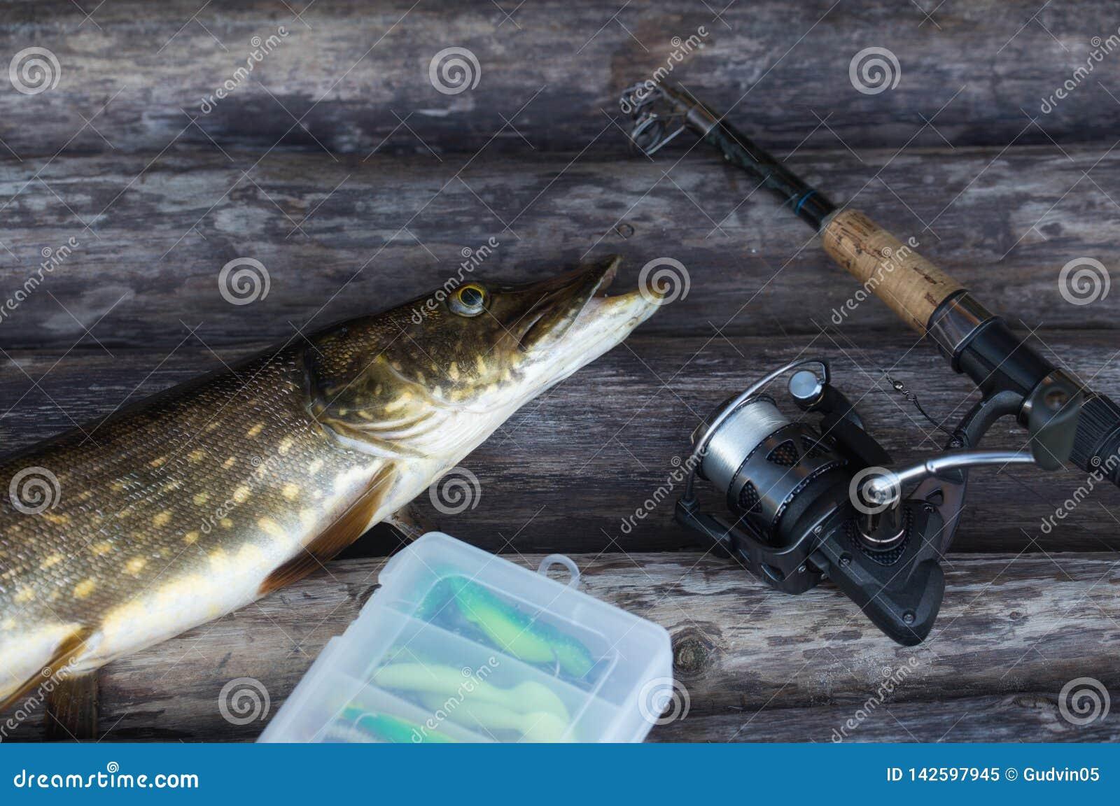 Пресноводные рыбы северной щуки и рыболовная удочка с вьюрком лежа на винтажной деревянной предпосылке
