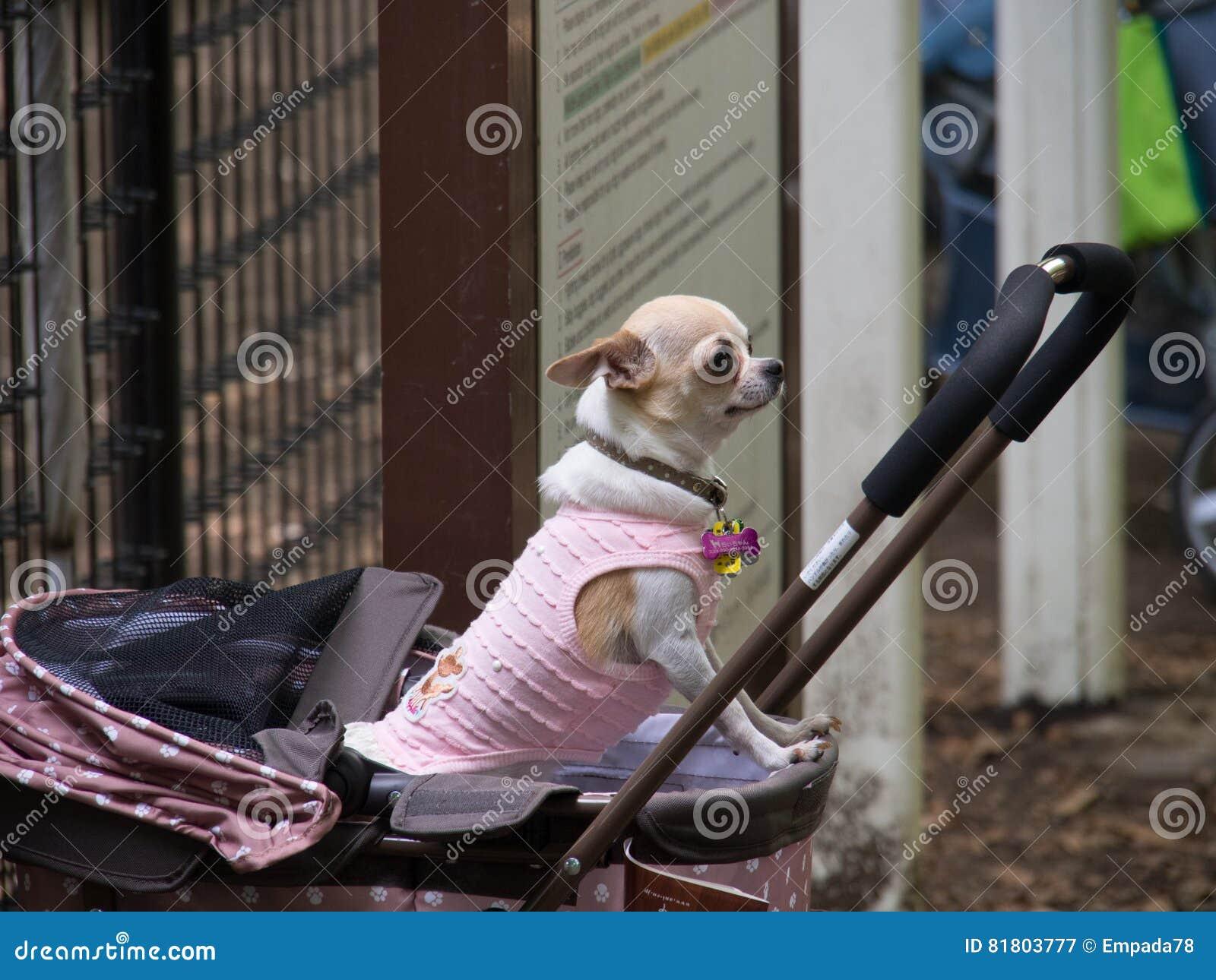 Прелестный щенок одеванный на день вне
