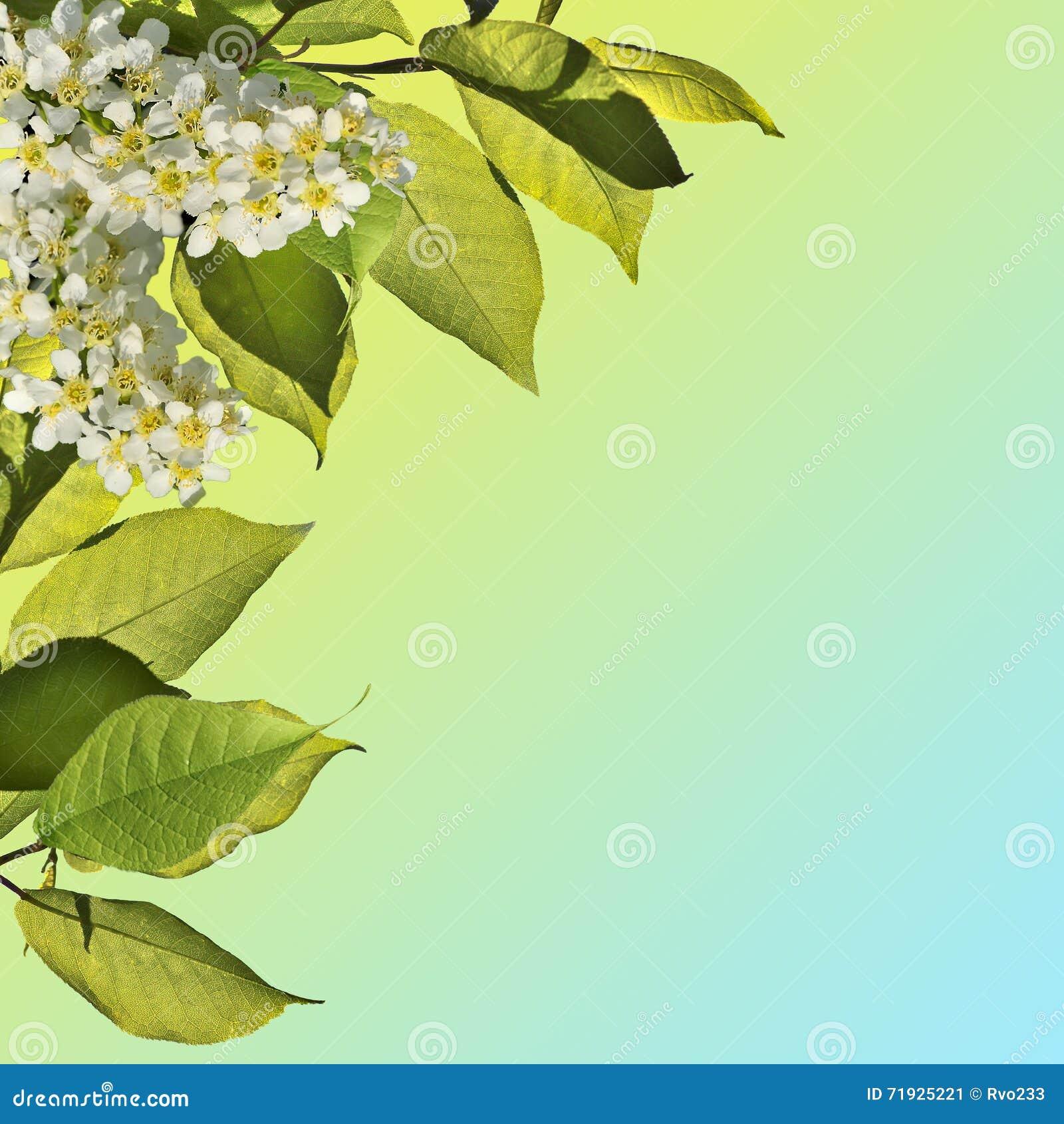 Предпосылка весны blossoming - абстрактная флористическая граница зеленого l