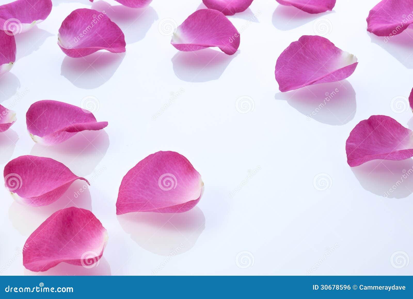 Предпосылка лепестков розы