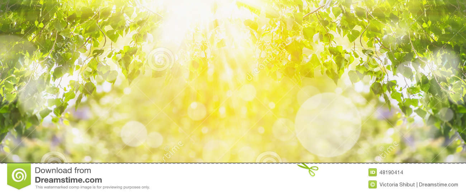 Предпосылка лета весны с зеленым деревом, солнечным светом и солнцем излучает