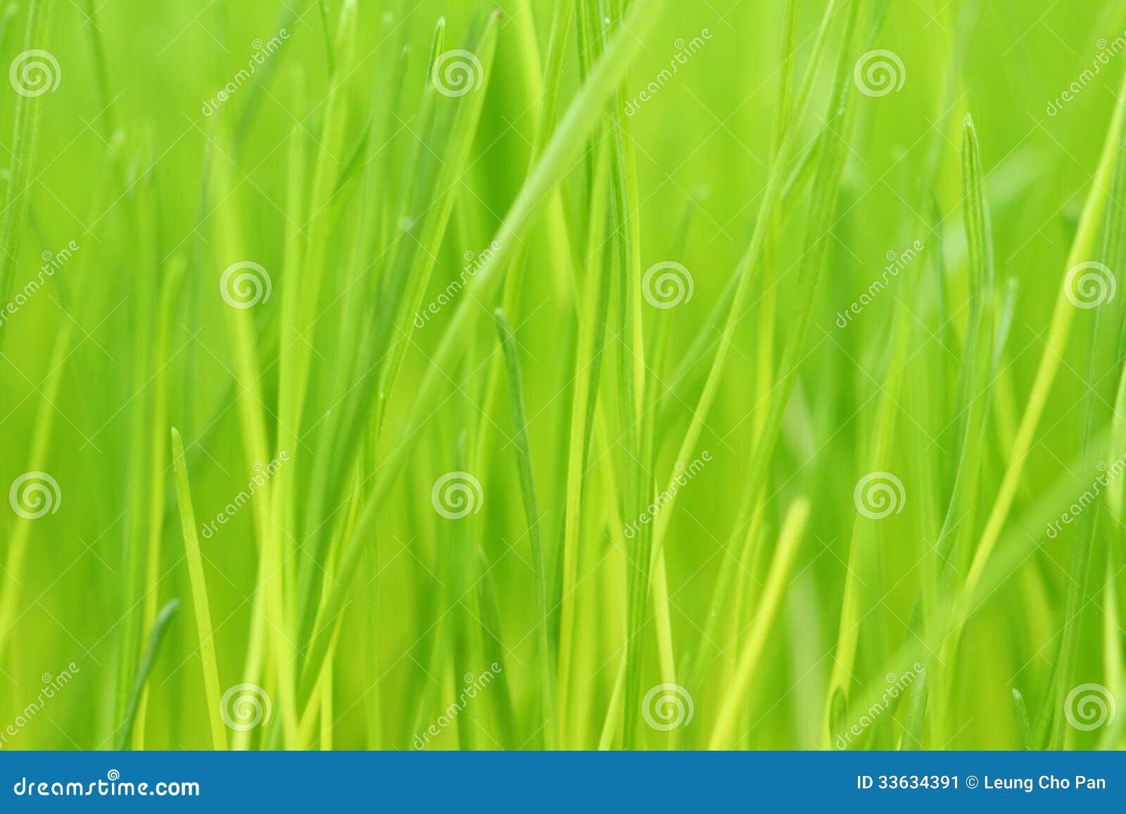 Предпосылка зеленой травы