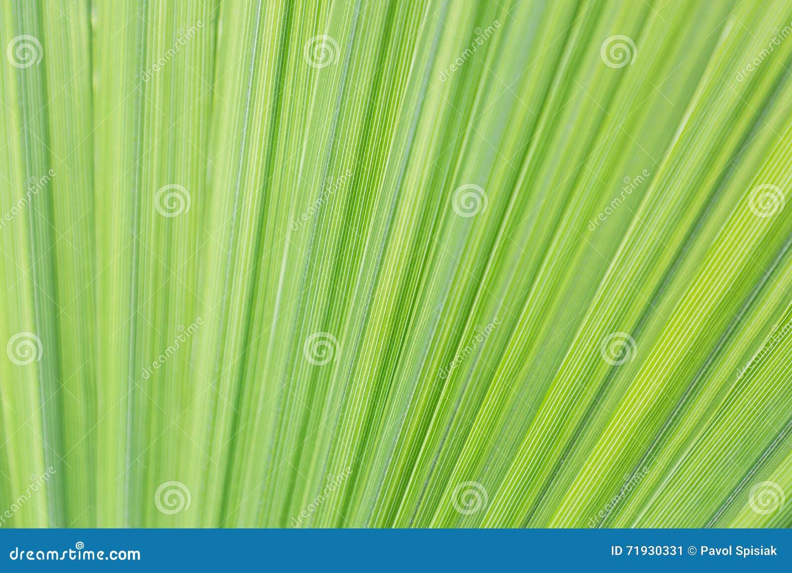 Предпосылка лист ладони