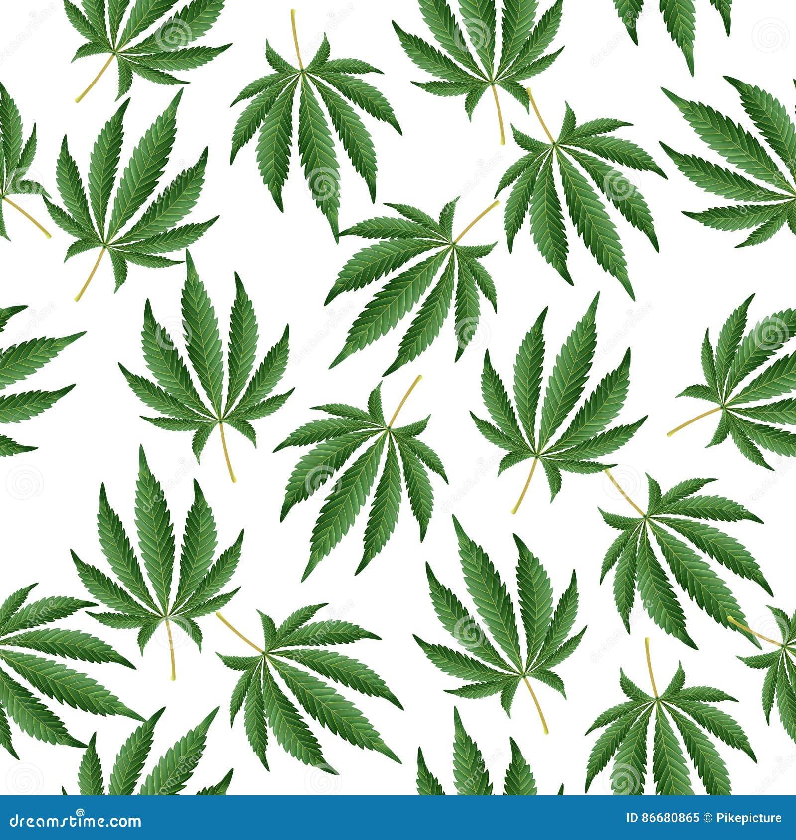 выращивания марихуаны способ гидропоника