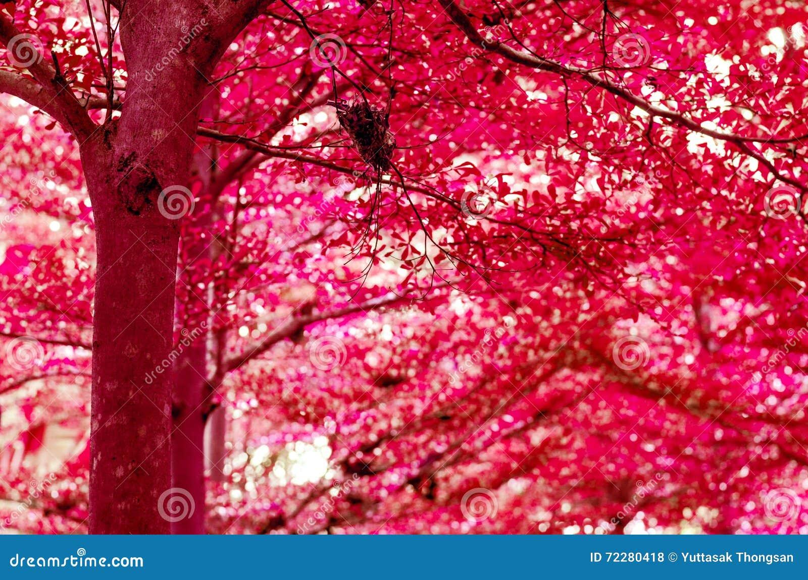 Download Предпосылка конспекта Beautifu леса красочная Иллюстрация штока - иллюстрации насчитывающей пуща, хлопья: 72280418