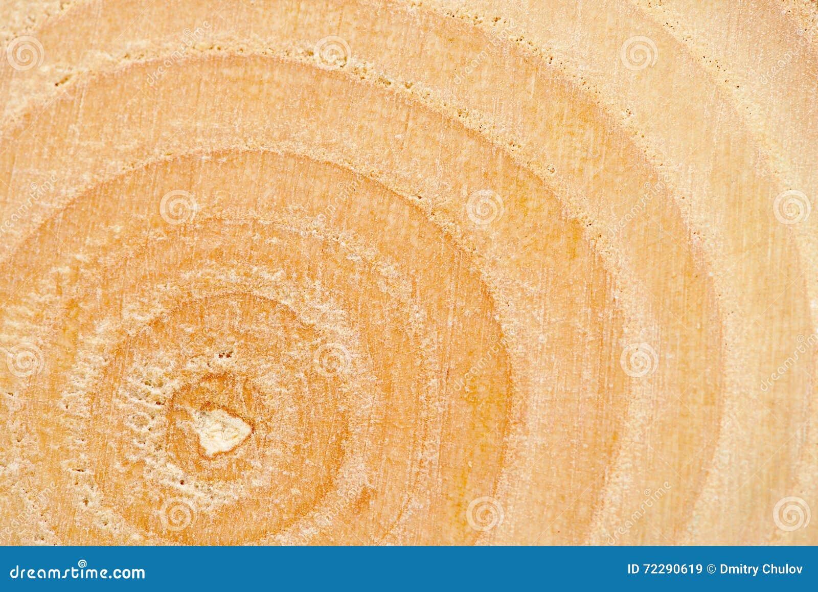 Download Предпосылка крупного плана года звенит текстура уникально дерева золы Relict (sogdiana Fraxinus) Стоковое Изображение - изображение насчитывающей макрос, материал: 72290619