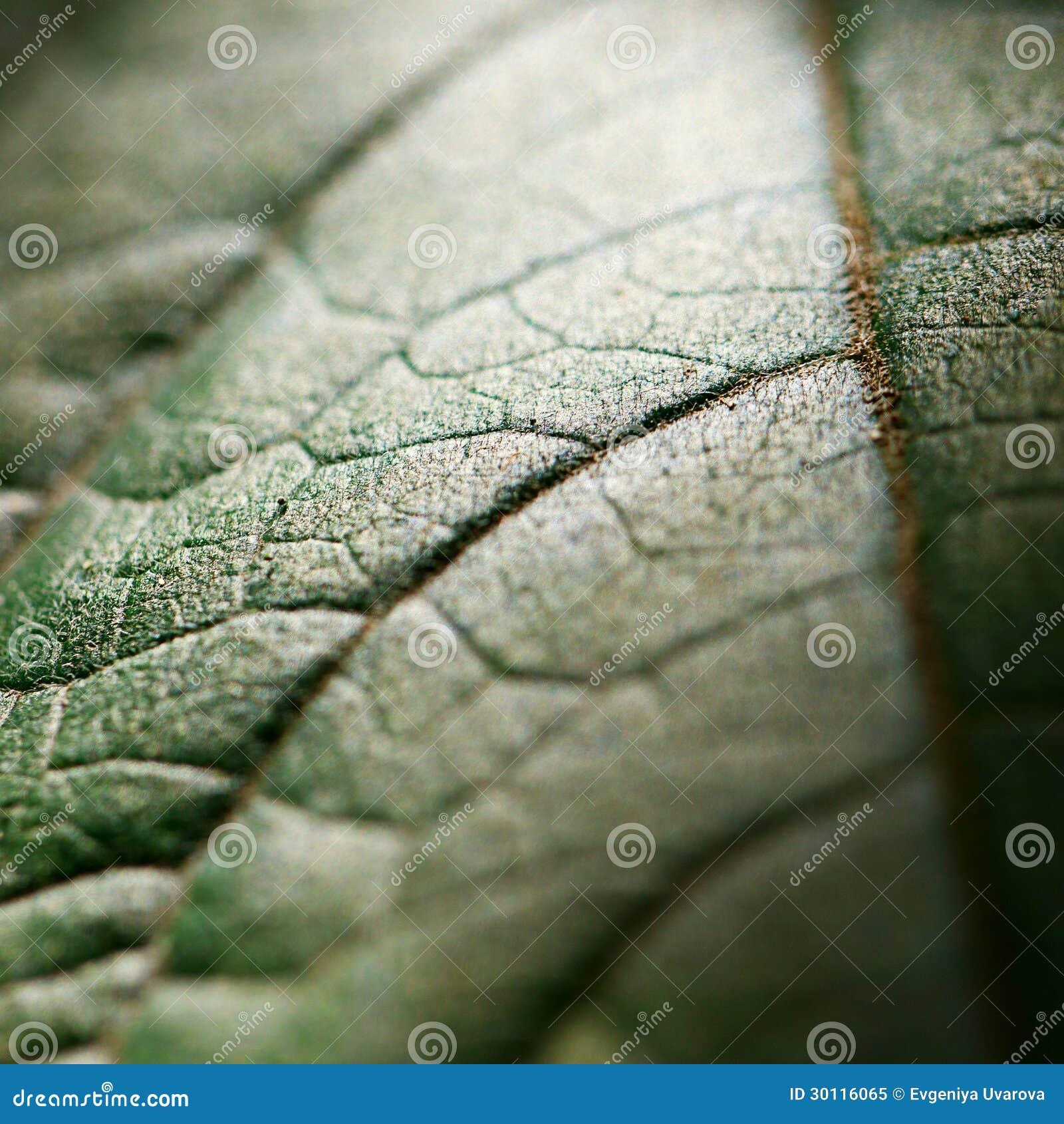 Предпосылка зеленых листьев