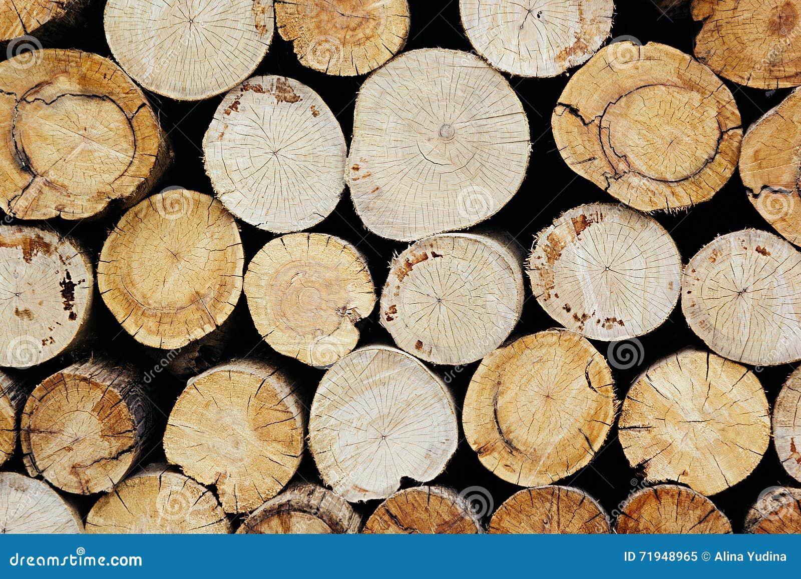 Предпосылка пней дерева Деревянная предпосылка