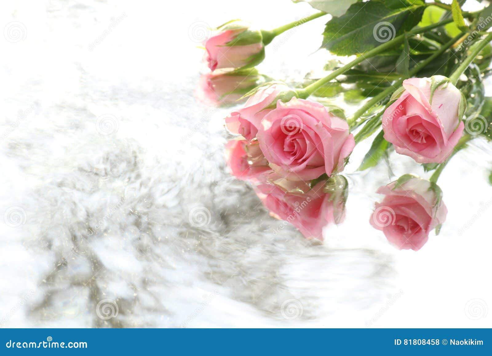 Предпосылка подачи розы и воды пинка