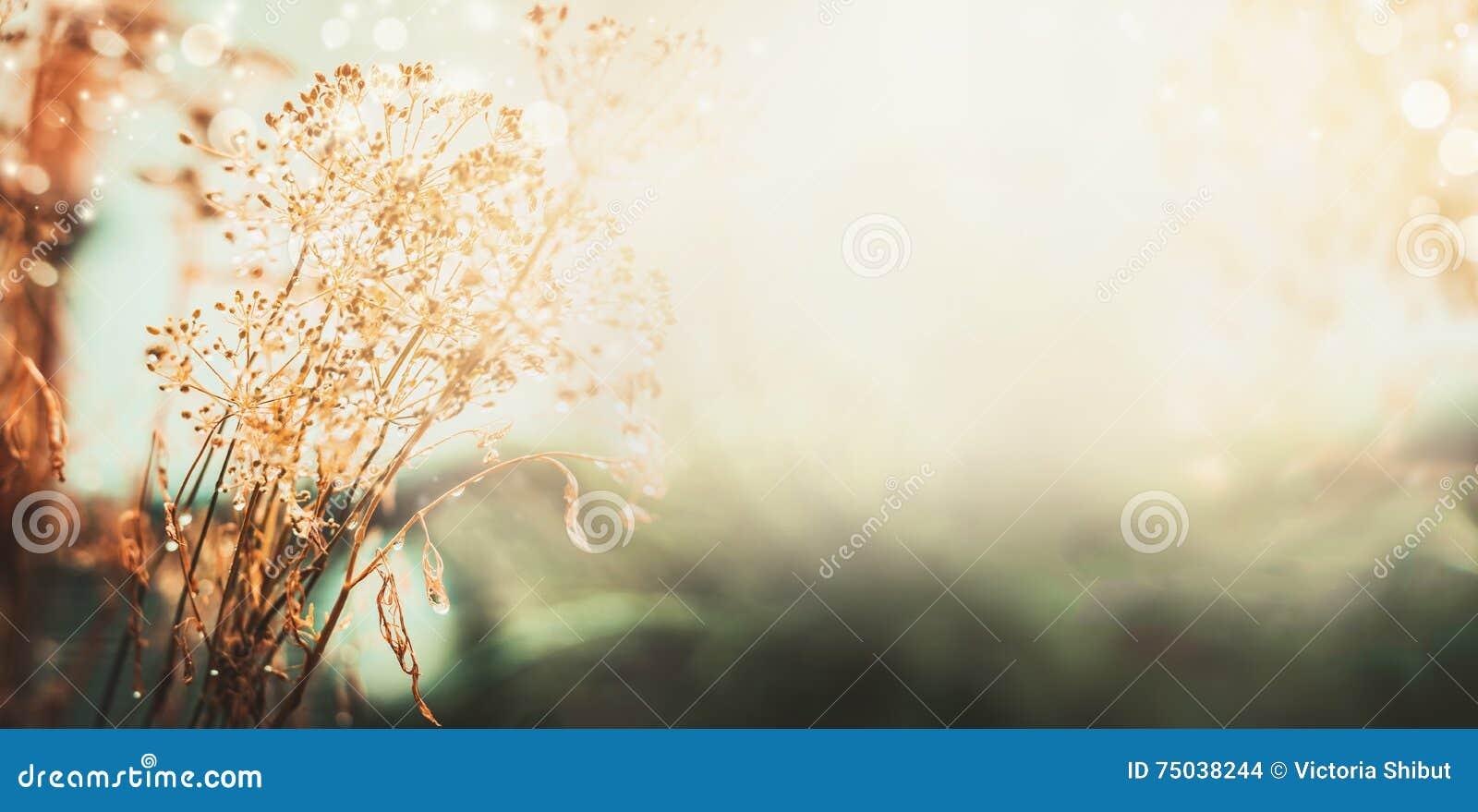 Предпосылка природы ландшафта осени Высушенные цветки с водой падают после дождя на поле, знамени