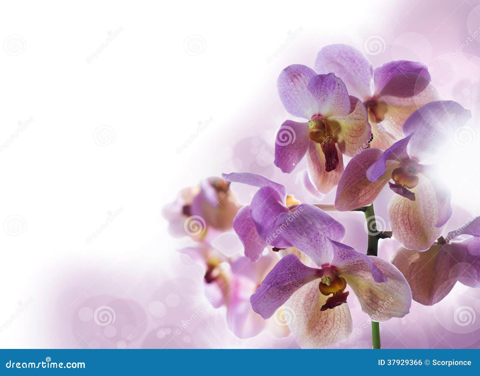 Предпосылка с орхидеями