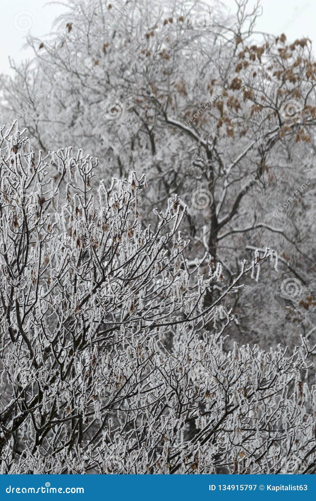 Привлекательный взгляд зимы покрытые валы hoarfrost