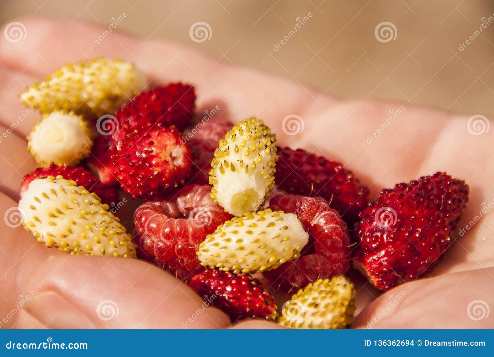 Пригорошня ягод в руке