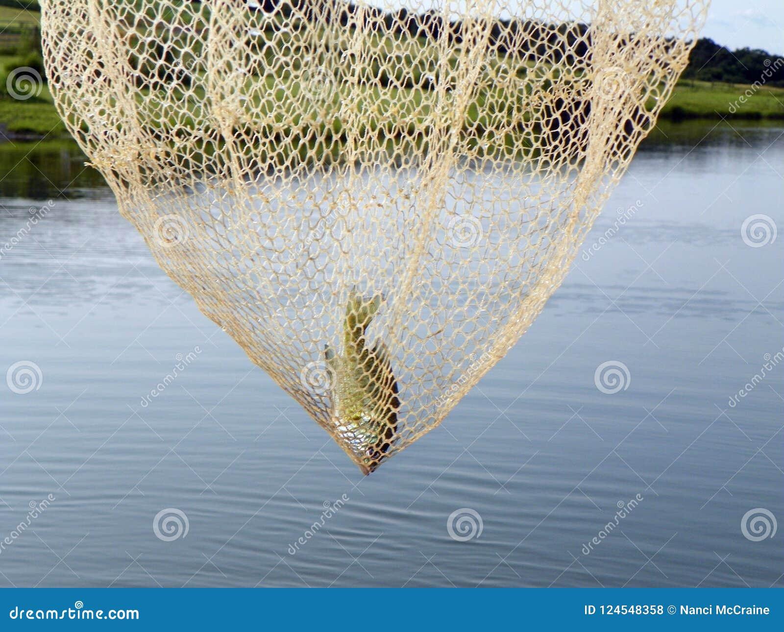 Призовая удя задвижка в большой сети прудом