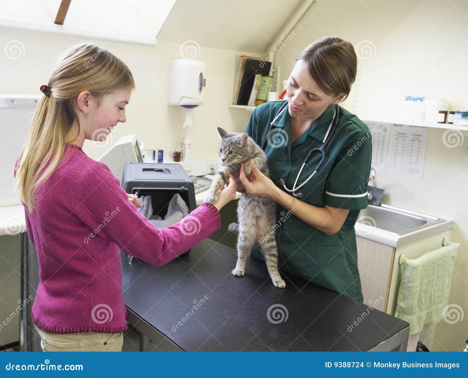 приносить детенышей ветеринара девушки рассмотрения кота