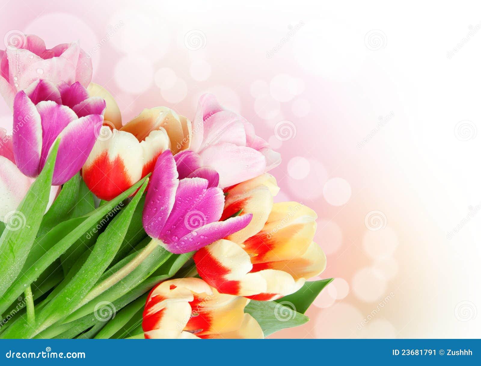 Открытки тюльпан