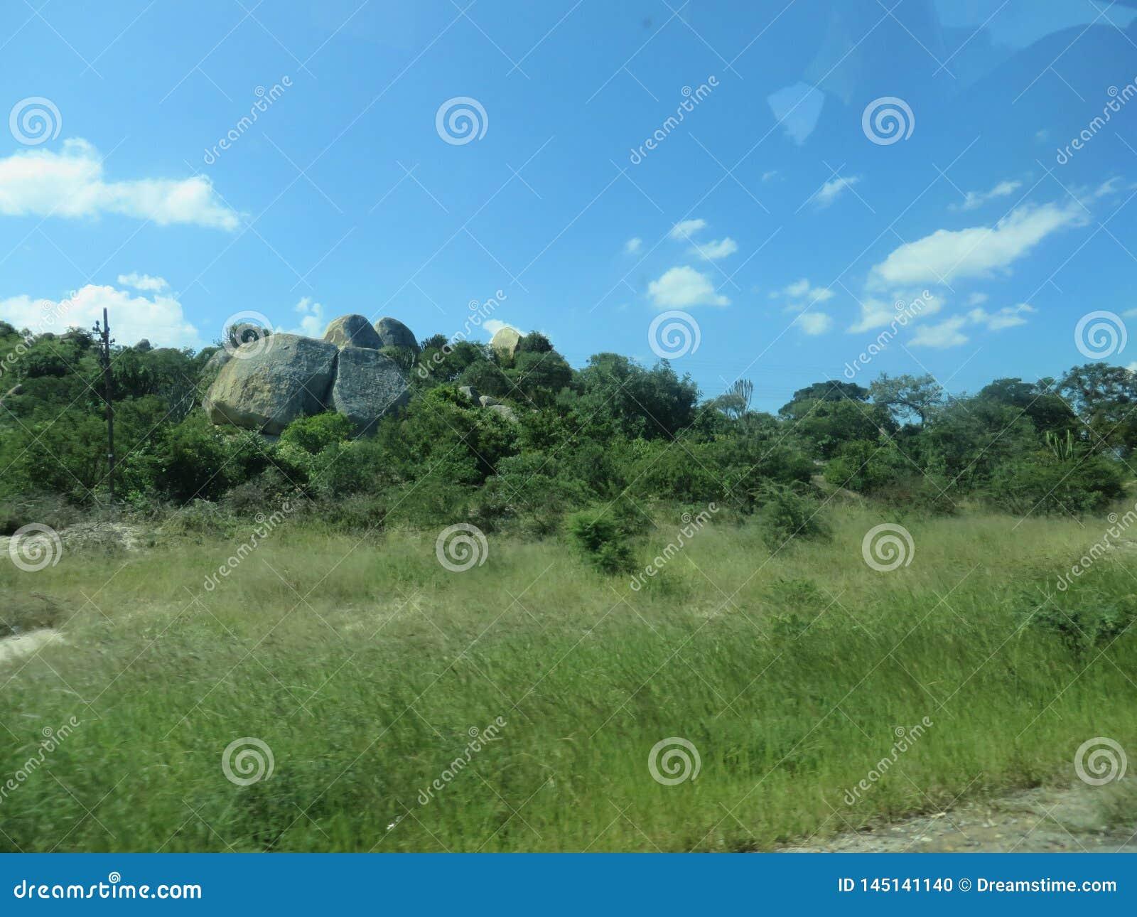 Природа в Африке с уникальной растительностью