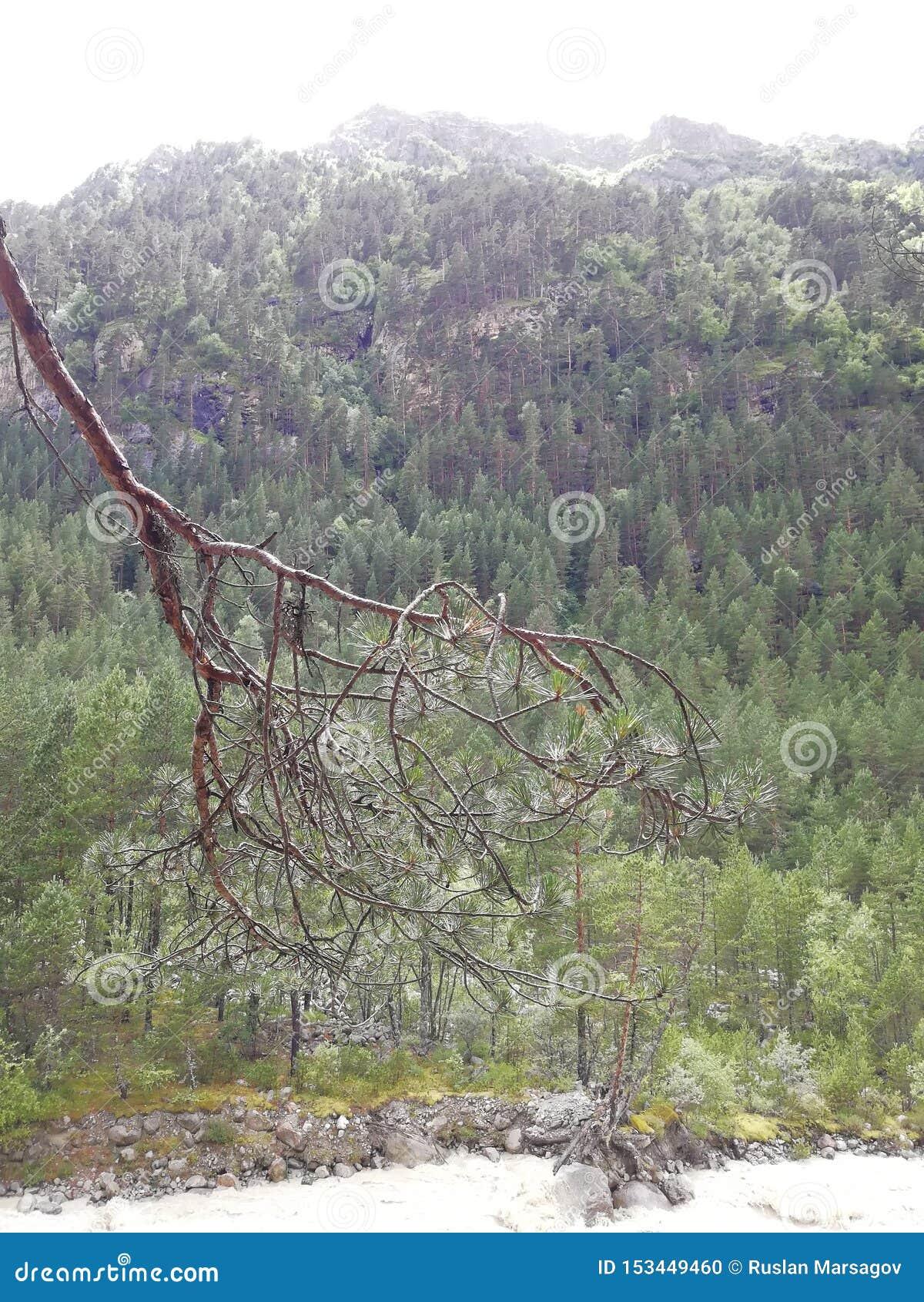 Природа реки alania национального парка горы
