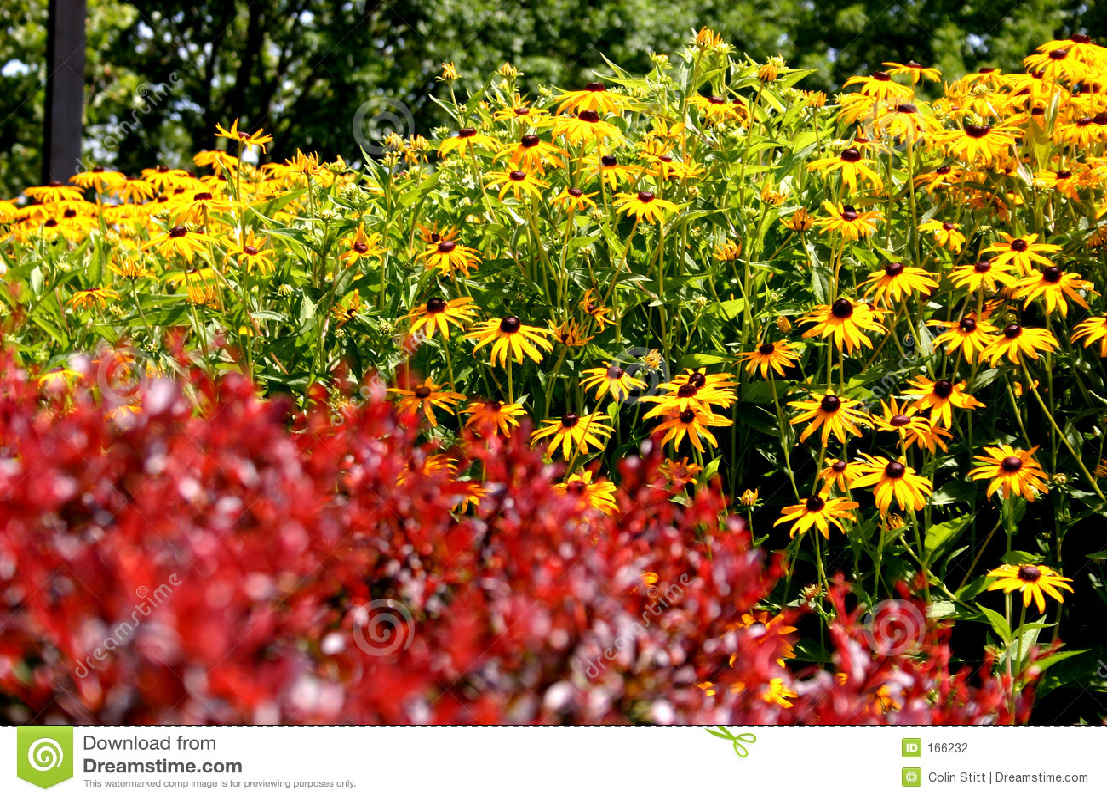 природа цвета