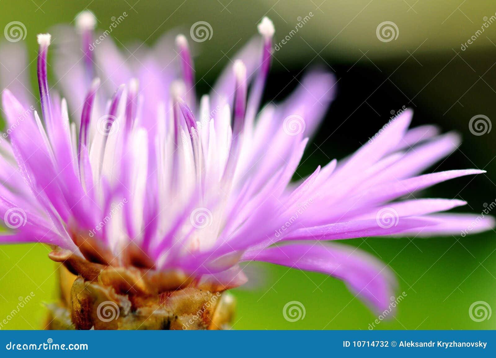 природа цветка