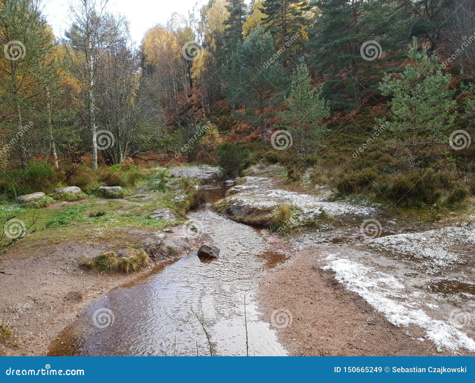 Природа bacground леса