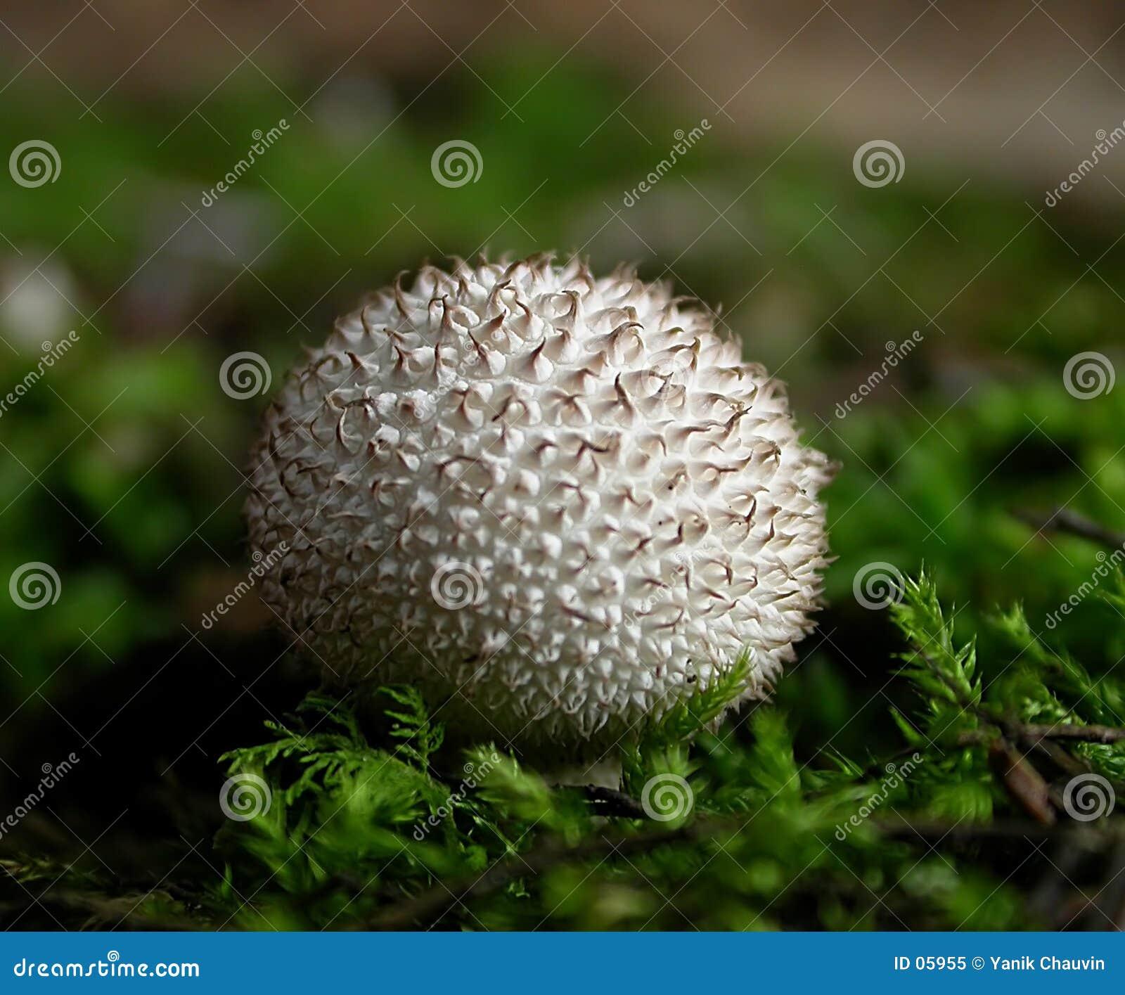 природа s гольфа шарика