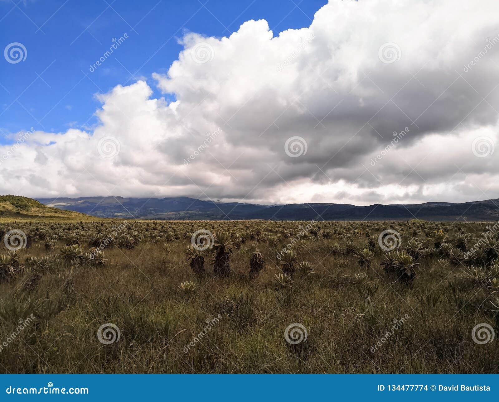 Природный парк Purace национальный в Колумбии с экосистемой paramo
