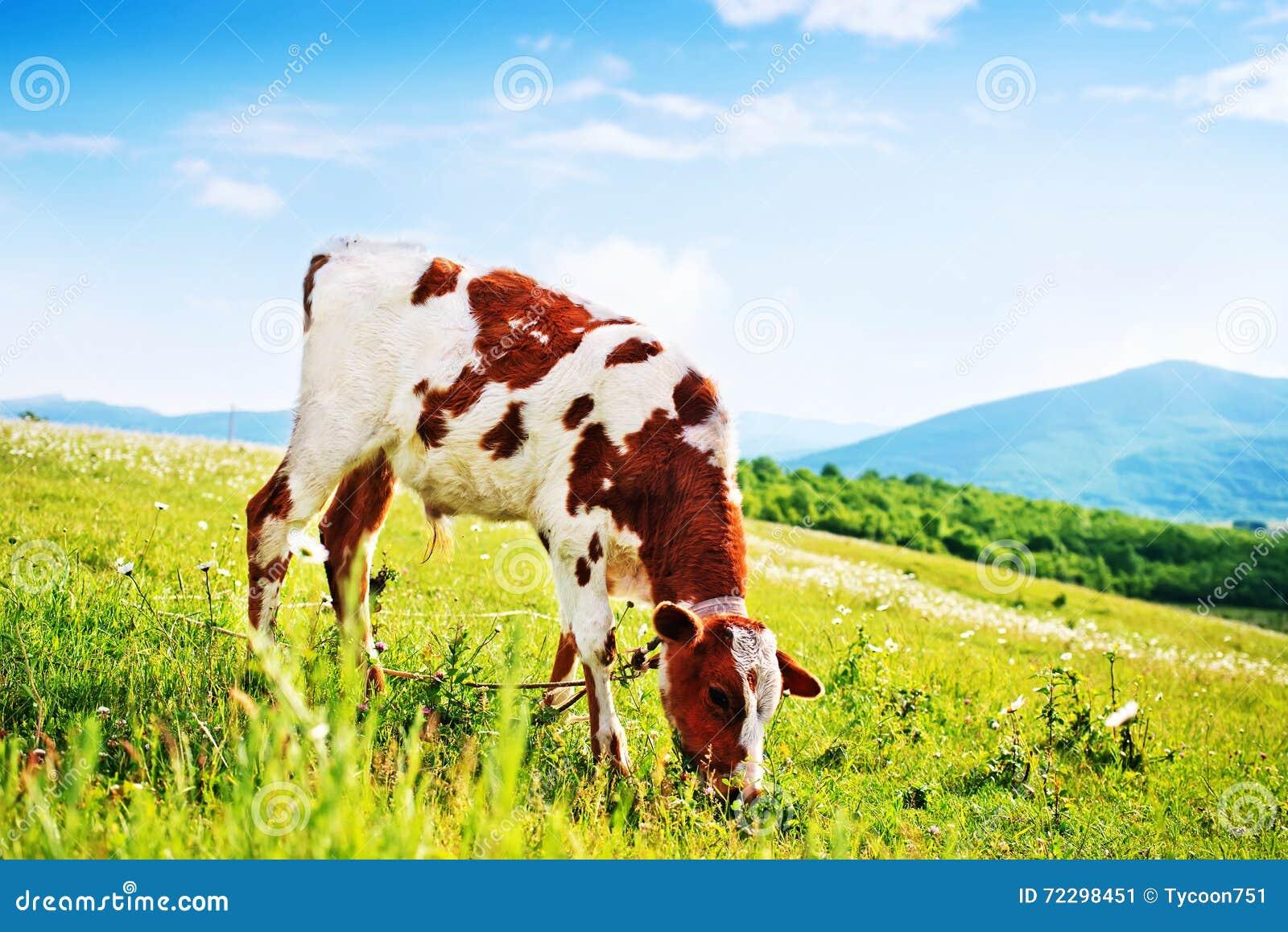 Download Природа стоковое изображение. изображение насчитывающей громоздкого - 72298451