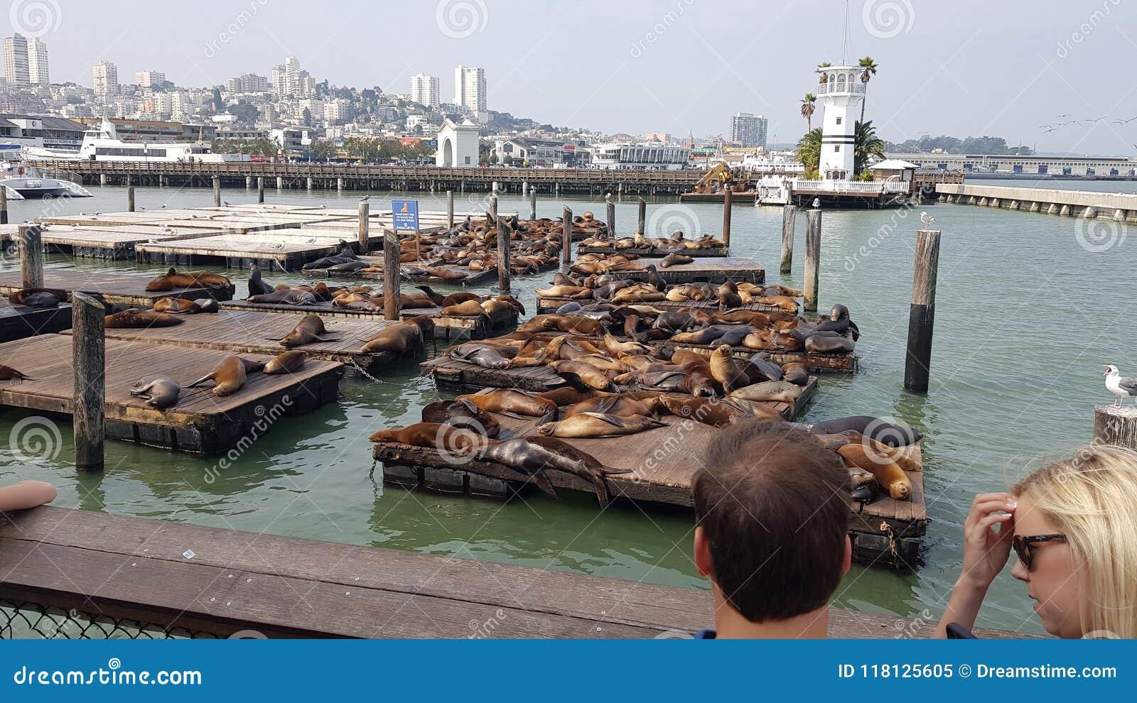 Пристань 39 Сан-Франциско морских львов