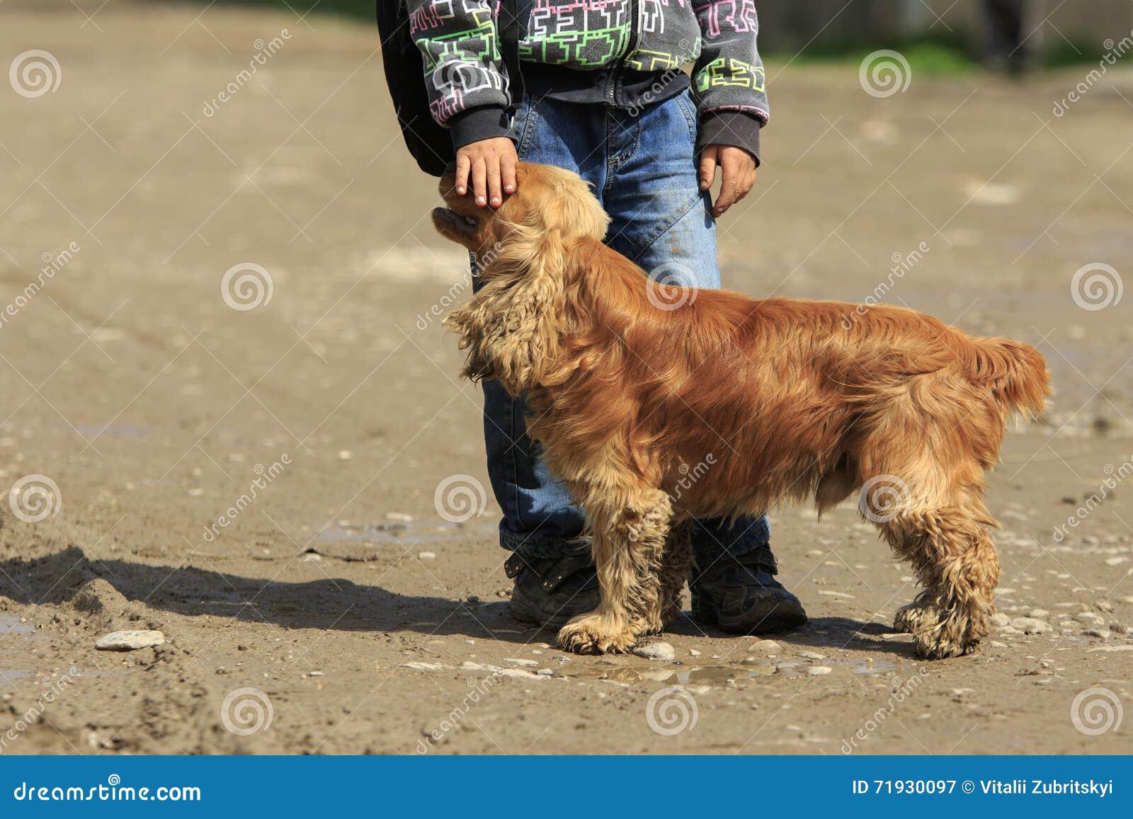 Приятельство собаки и мальчика