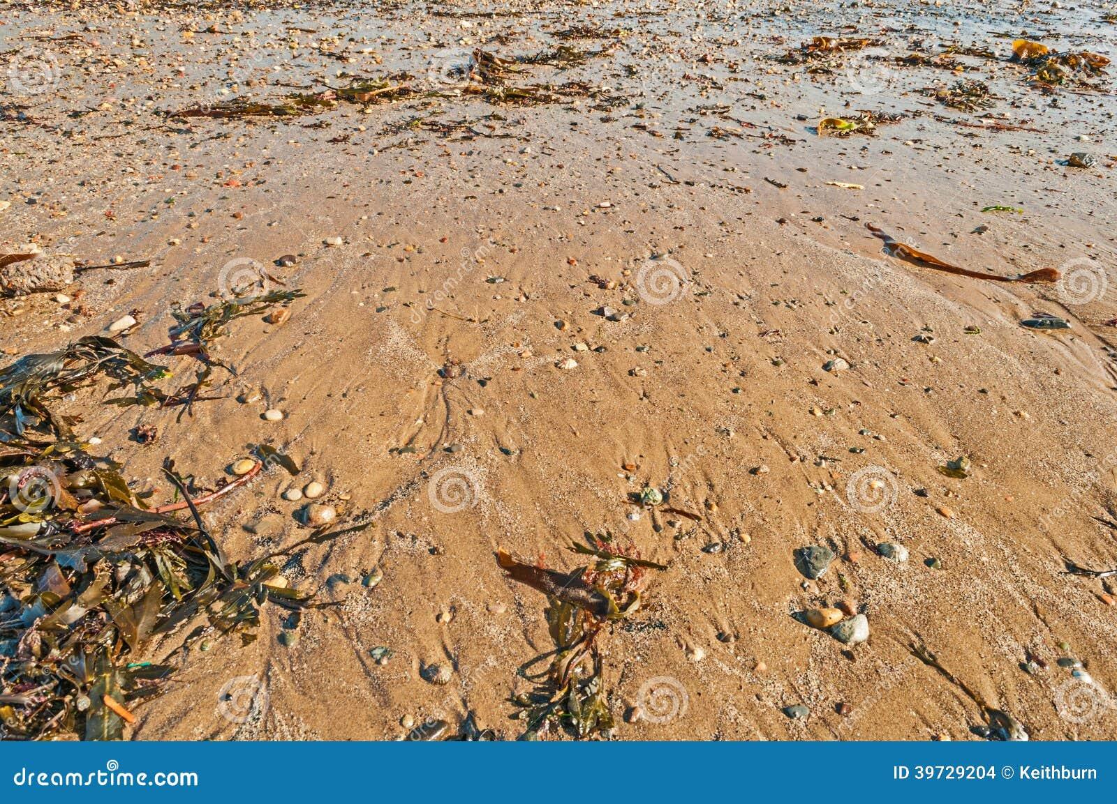 Прилив подмел пляж с раковинами, морской водорослью и камешками