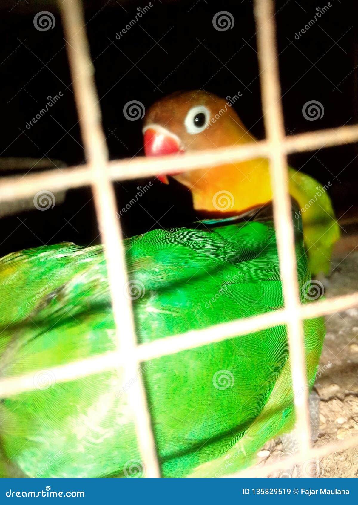 проарретированные птицы