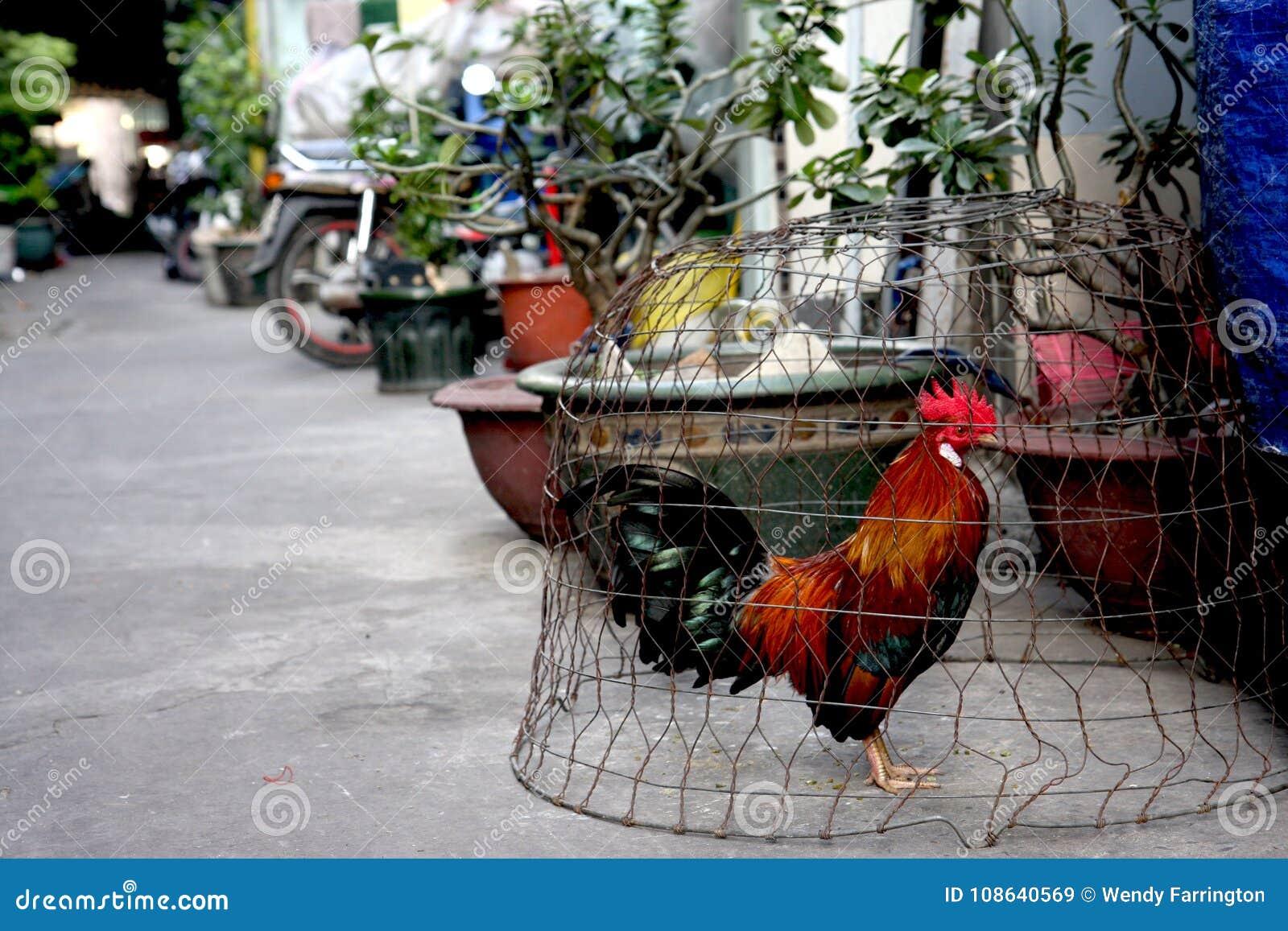 Проарретированный цыпленок на улице города