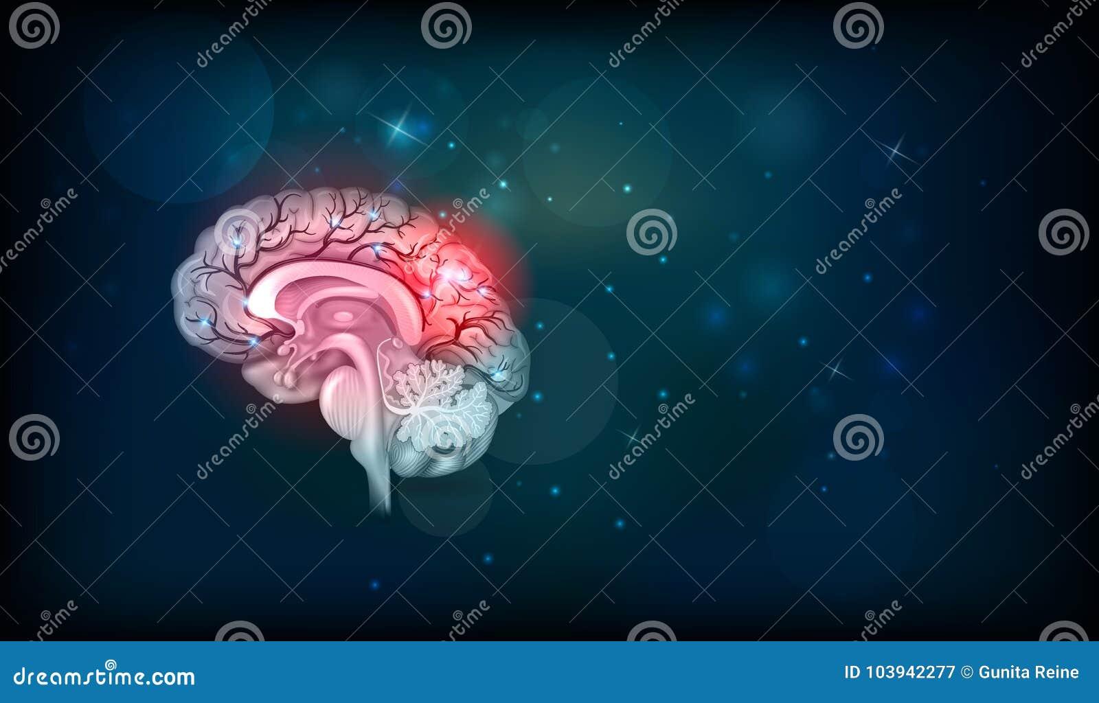 Проблемы человеческого мозга