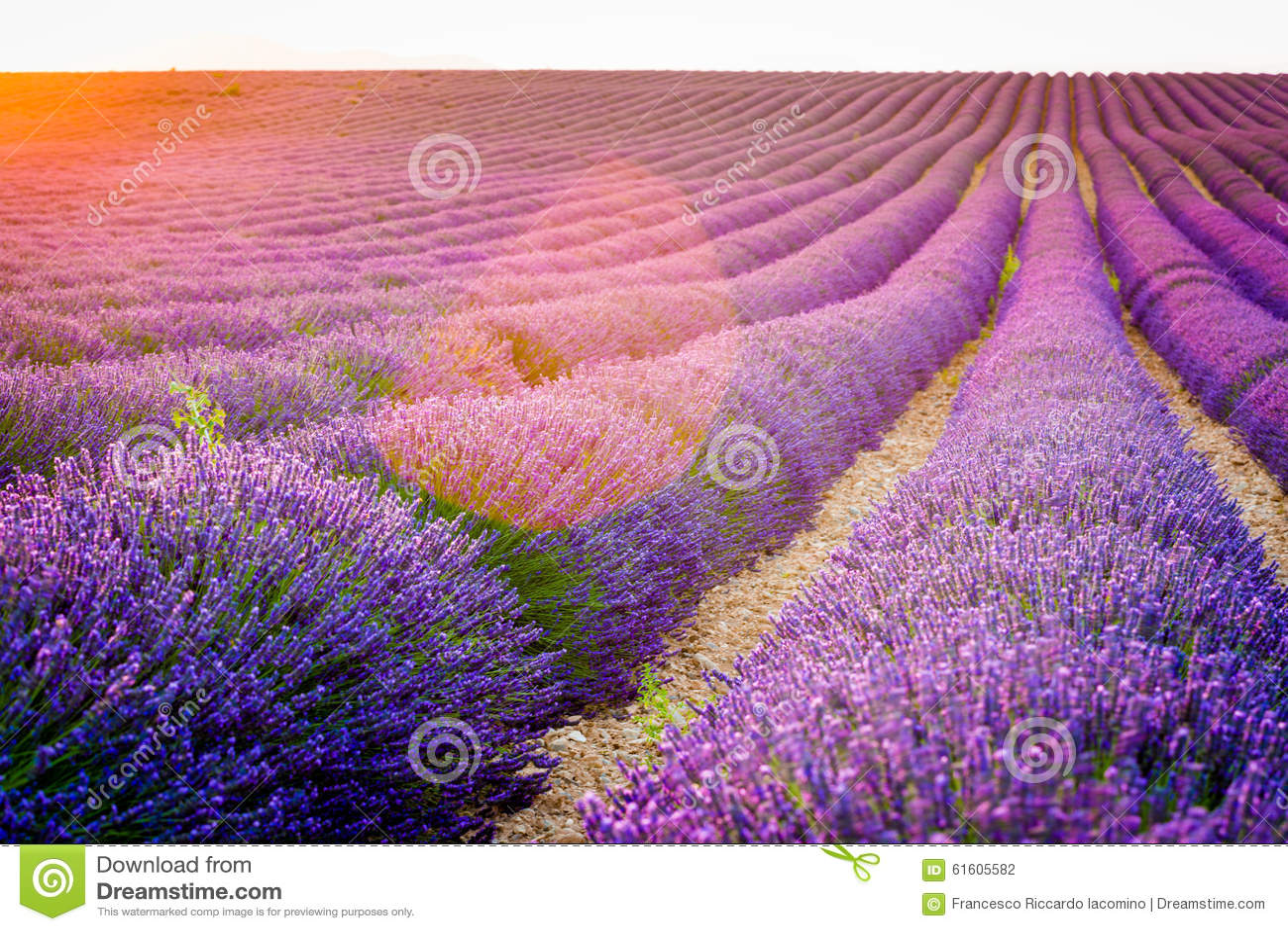 Провансаль, Франция, плато Valensole с фиолетовым полем лаванды