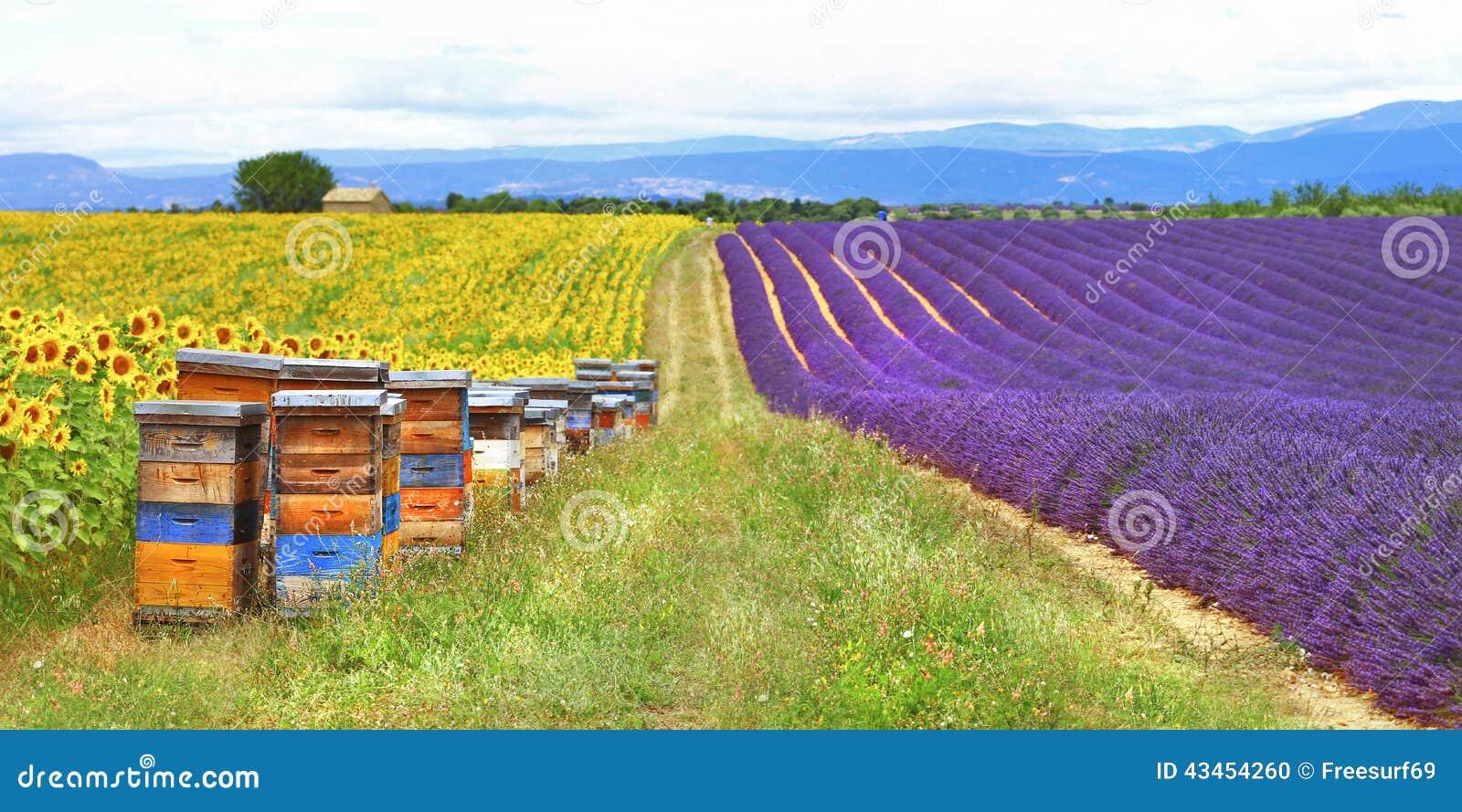 Провансаль, Франция, сельская местность