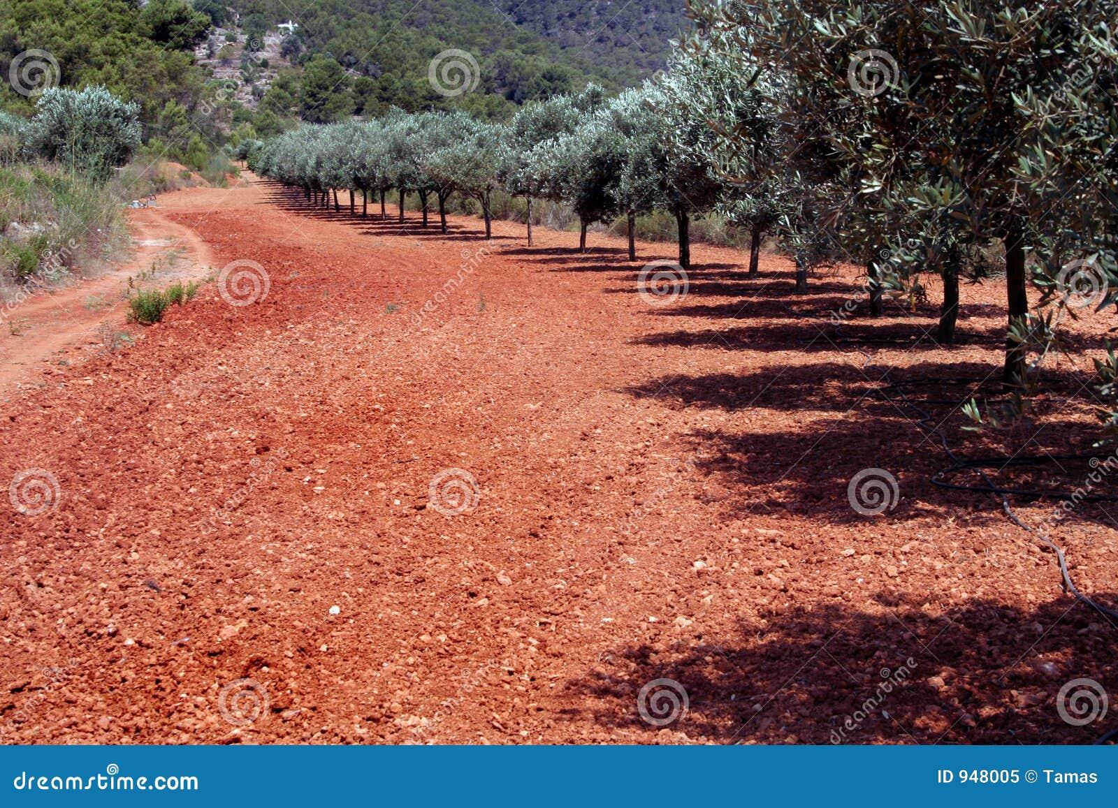 прованские красные валы почвы рядка