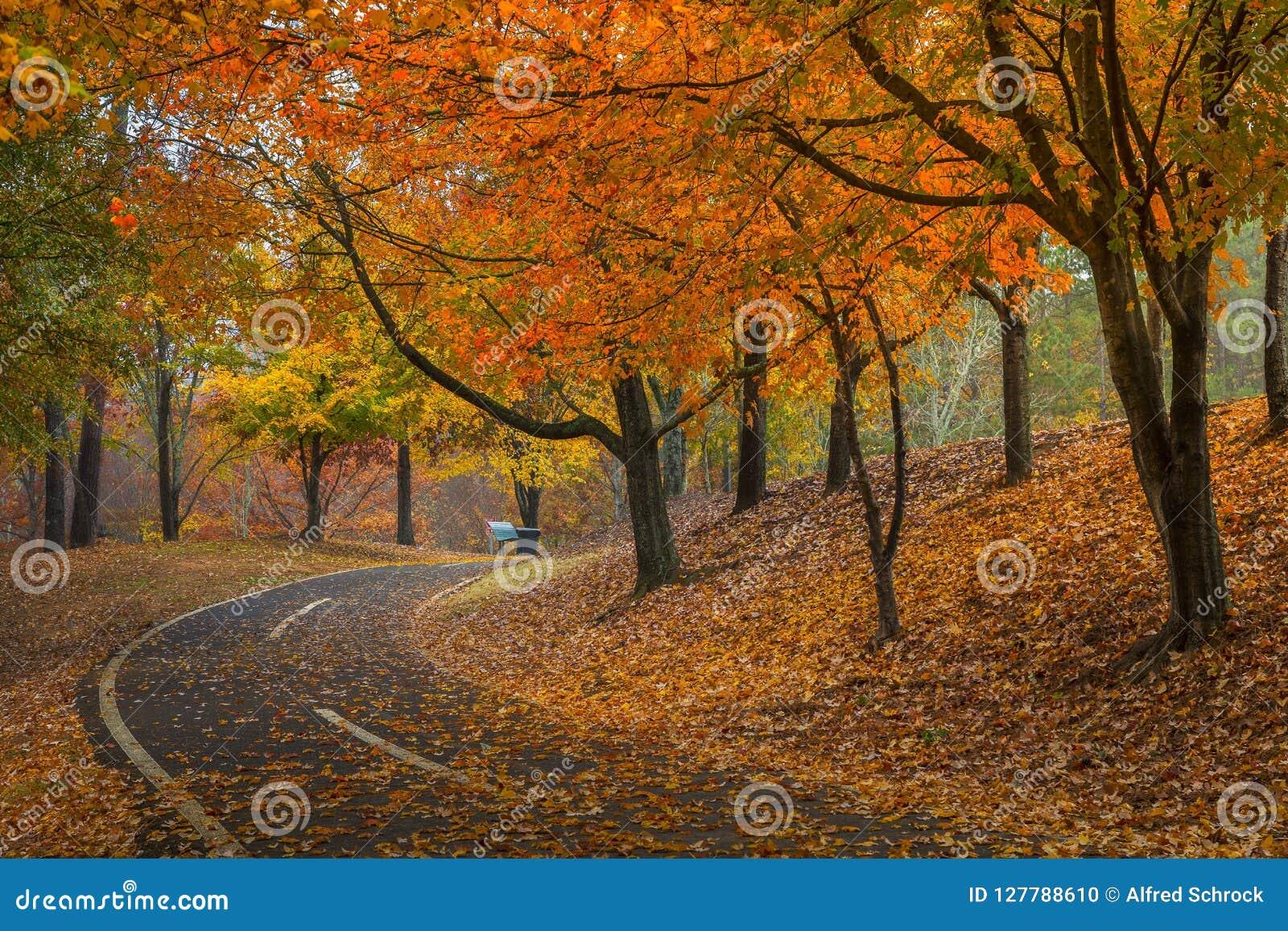 Прогулка в парке Newtown