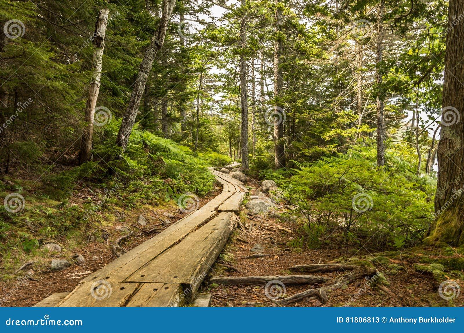 Прогулка через древесины