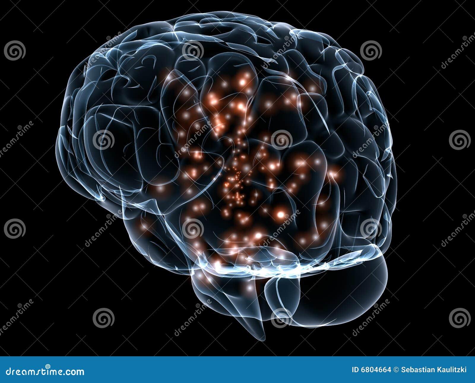 прозрачное мозга людское