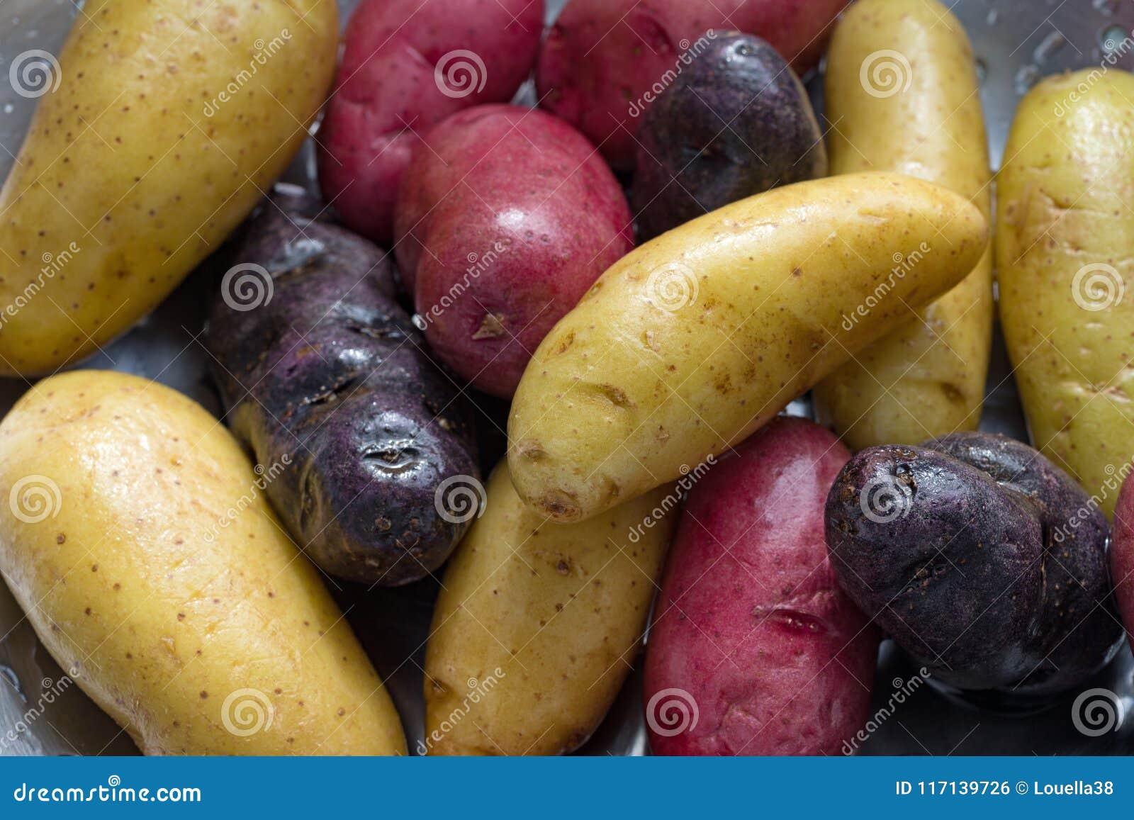 Прополосканные картошки fingerling в дуршлаге