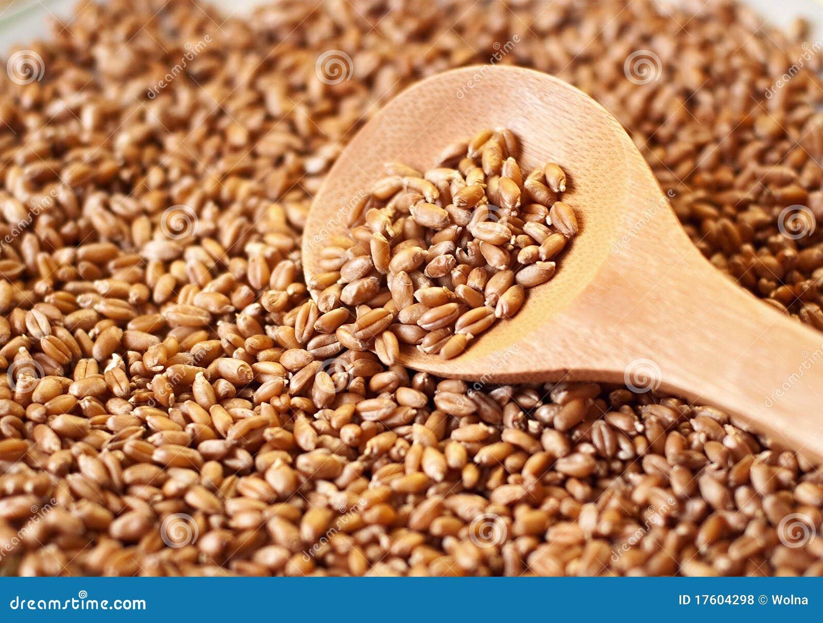 прорастанная пшеница ложки зерна деревянная