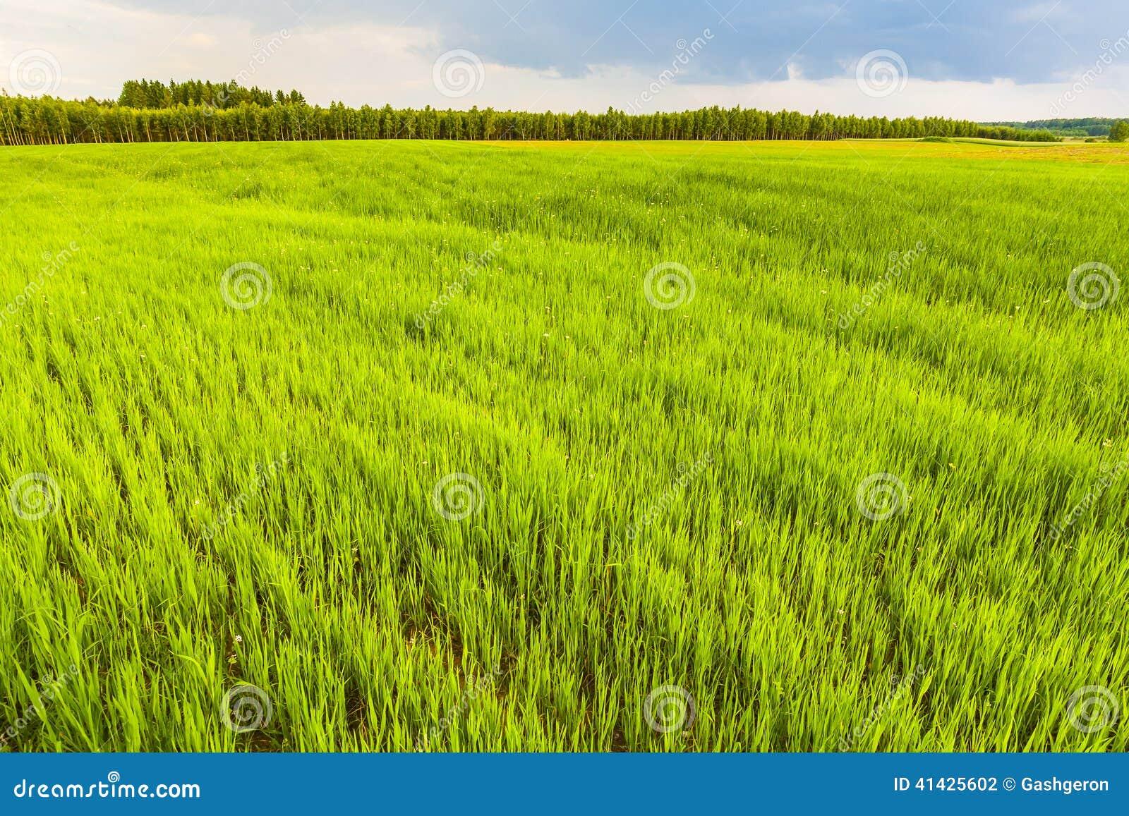Прорастать зерно