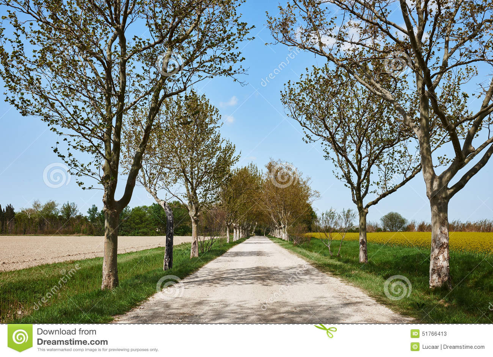 Проселочная дорога весной