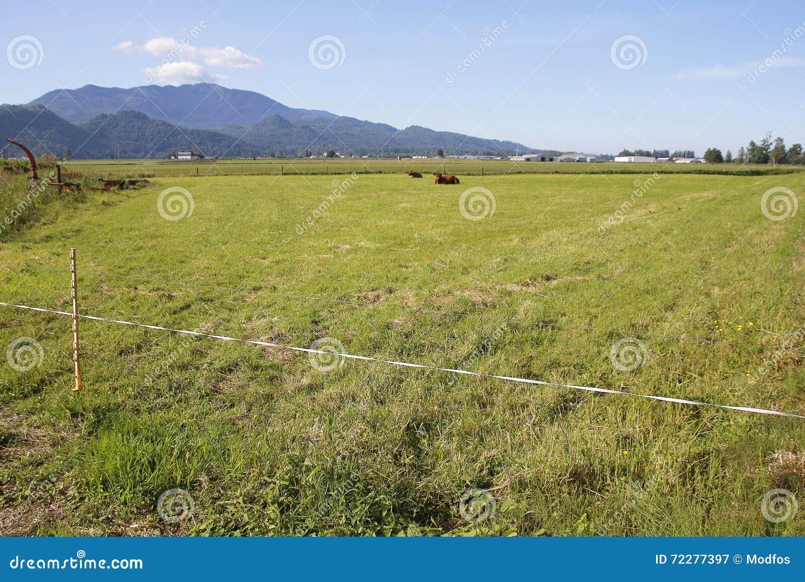 Download Простая электрическая загородка для поголовья Стоковое Изображение - изображение насчитывающей boris, легко: 72277397