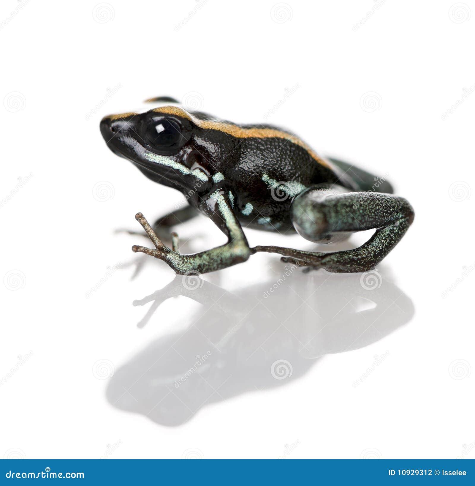 против белизны отравы лягушки предпосылки golfodulcean