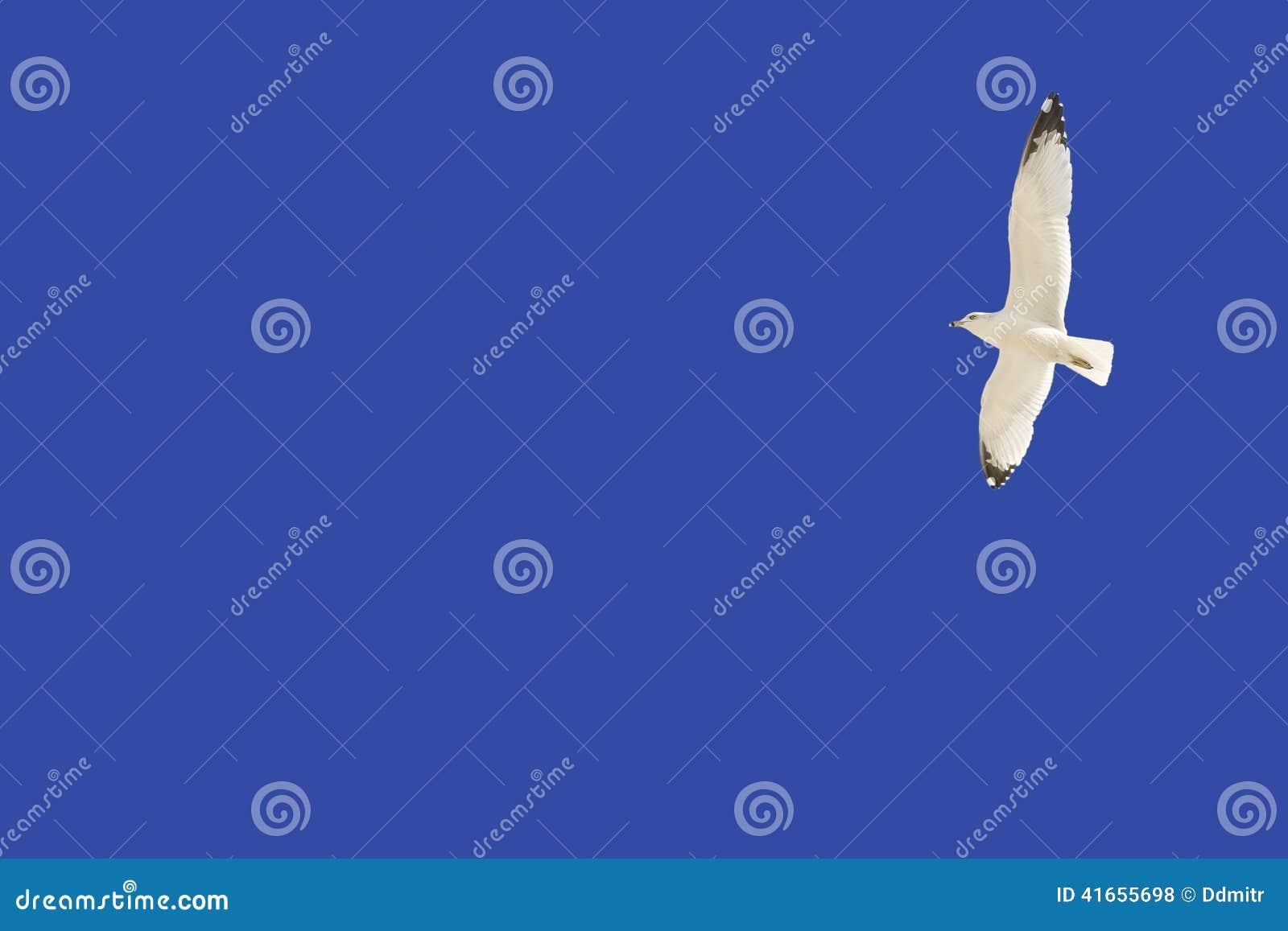 против голубого неба чайки